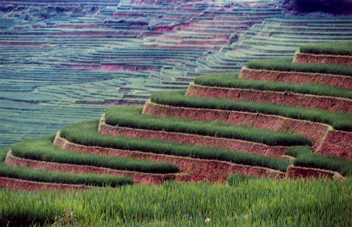 César Berrueco  Campo de arroz en el noroeste de Vietnam. Creo que para hacer turismo responsable hay que pensar a pequeña escala, utilizando bienes y servicios locales y de escala familiar. Este tipo de turismo, preferentemente en grupos pequeños permite interactuar con la población local y generar recursos en las comunidades que se visitan.