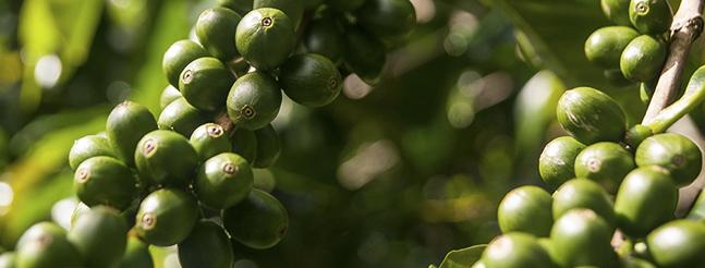 El agroturismo comunitario se abre paso entre la efervescencia económica de Panamá