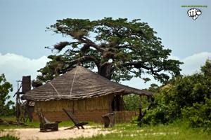 La costa de Senegal: conservación y protección de un ECOSISTEMA VITAL amenazado 2/2