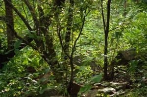 áfrica bosques