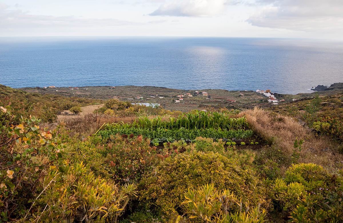 La permacultura, clave para un nuevo paradigma más sostenible en Canarias