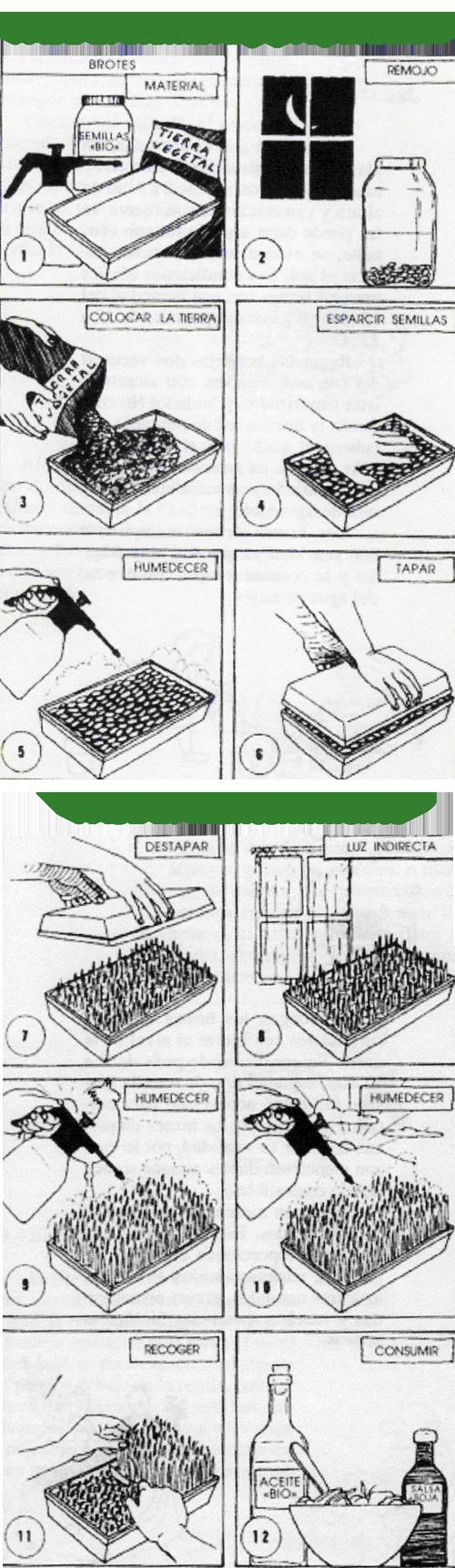 Germinados_ecologicos