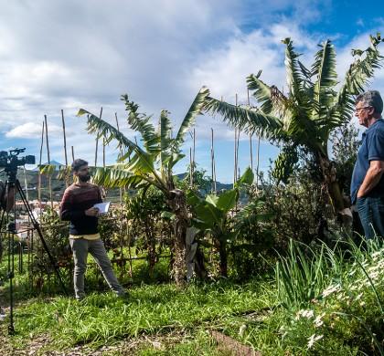 El proyecto LASOS: la necesidad de generar espacios de acción colectiva hacia una isla de Tenerife más sostenible y autosuficiente