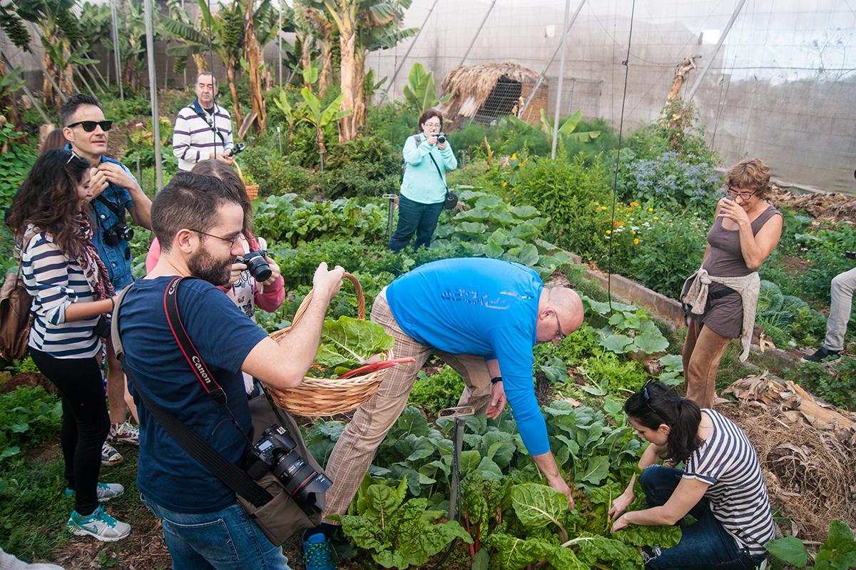 Mucho camino que recorrer para una agricultura sostenible y productiva en Canarias