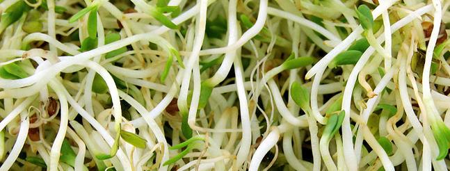 Doce recomendaciones para obtener tus germinados ecológicos en casa