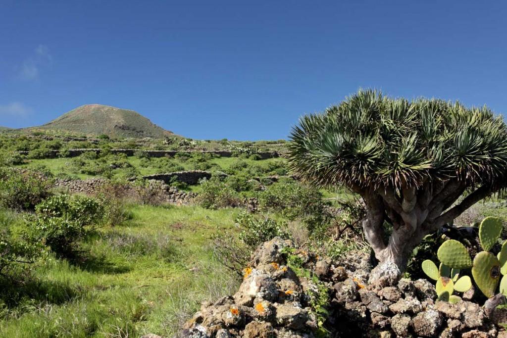 permacultura en Canarias