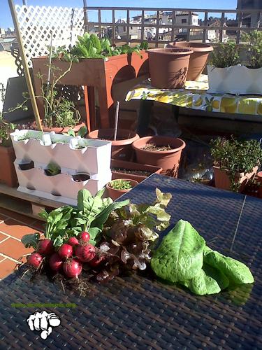 huerto urbano agricultura urbana