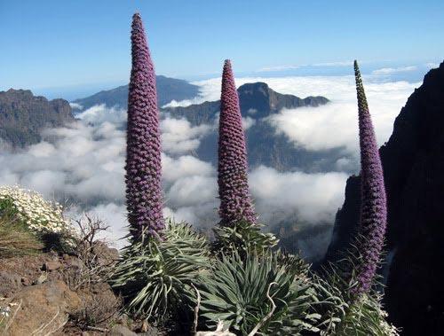 La Palma en las Islas Canarias, paraíso para el turismo SLOW