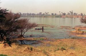 Nilo contaminado