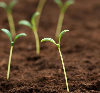 Permacultura y Eco-dependencia: los secretos de la vida