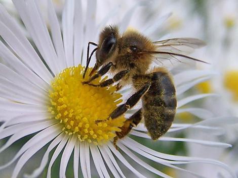La PERMAPICULTURA llega a España: el arte de darle todo el protagonismo a las abejas