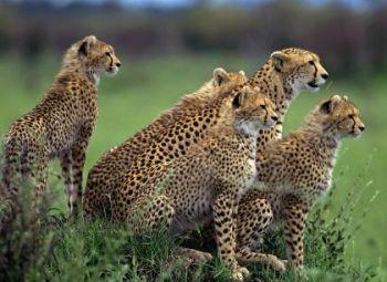 El abstracto equilibrio para un TURISMO SOSTENIBLE en los Parques Nacionales de África